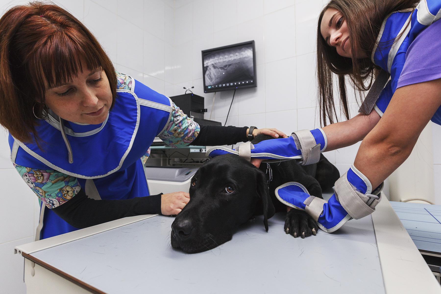 radiografía veterinaria diagnóstico por imagen
